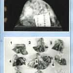 Fotodokumentace vzorků popela a spálenin zaslaných Kriminalistickému ústavu VB Praha k vypracování znaleckého posudku z oboru grafické diagnostiky a chemie
