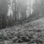 Stone wall with trees; initial survey of a possible shelter; 1959.