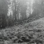 Kamenná zídka se stromy. Prvotní průzkum možného úkrytu, rok 1959.
