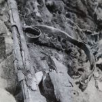 The Mauser 98K German gun found in site no. 2 in May 1965.