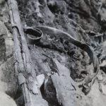 Německá puška Mauser 98K nalezená při průzkumu pracoviště č. 2 v květnu 1965.